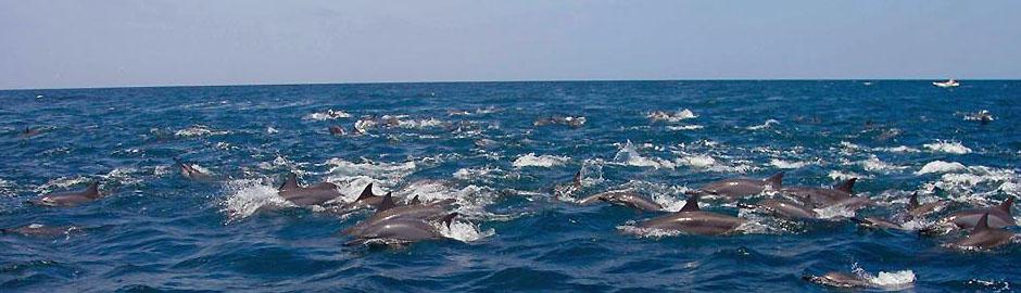 mandala-whale