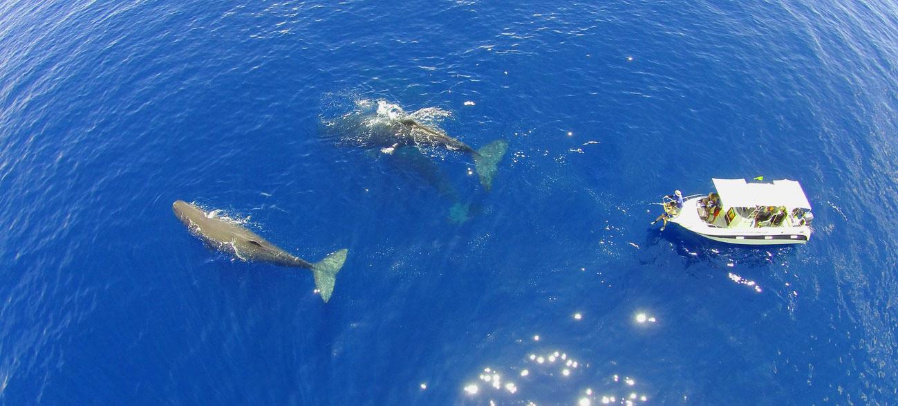 slider-iain-whale