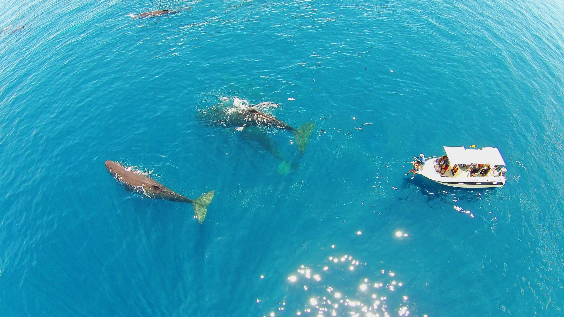 slider1-iain-whale